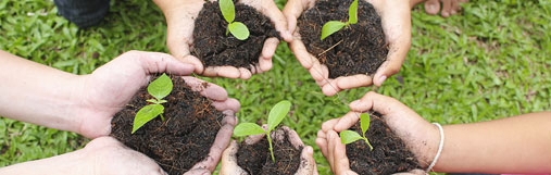 Image of hands holding budding plants in soil