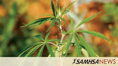 SAMHSA News